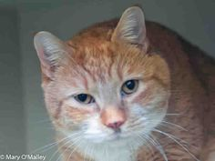 PetHarbor.com: Honey, female about 6 years old, at Fairfax Co. Animal Services, Fairfax, VA since Jan. 2014