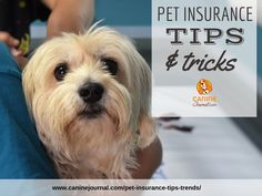 Discover about health insurance tips . Take a look here to learn more. Pet Insurance Reviews, Pet Health Insurance, Best Pet Insurance, Insurance Benefits, Puppy Care, Dog Care, Can Dogs Eat Strawberries