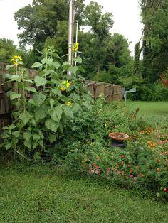 Flowers in my vegetable garden