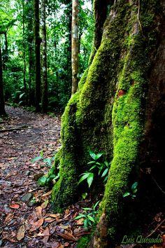 En medio del sendero - Bajos del Toro, Alajuela Costa Rica
