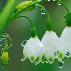 snow drops & rain drops
