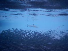Maldives - diving with Sub Aqua Dive Center