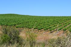 Maule Valley | Palo Alto Wines