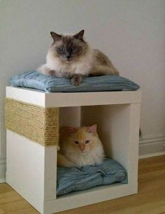 Hacks That Will Make Any Cat Owner's Life Easier Tie sisal rope around an Expedit single shelving unit to create a scratch post and cat bed in one.Tie sisal rope around an Expedit single shelving unit to create a scratch post and cat bed in one. I Love Cats, Crazy Cats, Bad Cats, Cat Hacks, Hacks Diy, Cat Room, Ikea Hackers, Pet Furniture, Diy Stuffed Animals