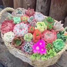 Succulent Outdoor, Succulent Bowls, Succulent Landscaping, Terrarium Plants, Succulent Terrarium, Planting Succulents, Planting Flowers, Growing Fruit Trees, Diy Garden Fountains