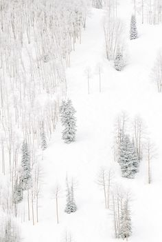 // winter white trees snow mountains slope wilderness