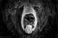 GREETING LIKE EINSTEIN by Wolf Ademeit