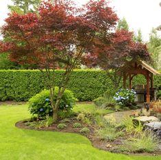rot gefärbte Ahornbäume, immergrüne Hecke und blaue Hortensien