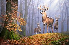 Deer Painting - King Of The Hill by John Cogan Hunting Art, Bow Hunting, Wildlife Paintings, Wildlife Art, Deer Paintings, Deer Wallpaper, Deer Pictures, Deer Pics, King Of The Hill