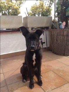 Se llama Negrita es una perrita muy feliz muy educada que siempre se le a dado lo mejor tanto de comida...