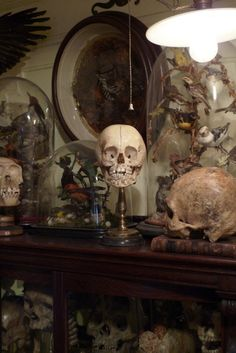 The Victorians were very curious about various subjects, one of them being the human anatomy. Cupboards, glass cabinets and drawers would be stuffed with artifacts from their many trips abroad during the age of enlightenment,