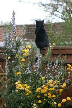 Beautiful black cat pose. I wonder what is out there says the black cat. Hesitating to want to leave. Cute.
