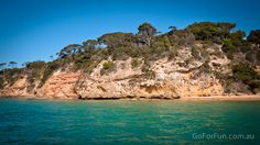 See Dolphins, Seals and Gannets In Port Phillip Bay: Eco Boat Discovery Tour. From Queenscliff Harbour with South Bay Eco Adventures. Dolphins, Places To Travel, Discovery, Fisher, Seal, Sailing, Travel Photography, Destinations, Australia