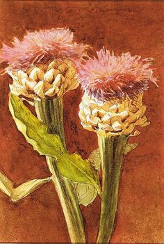 Thistle, John Singer Sargent (American, Florence 1856–1925 London), Watercolor and graphite on off-white wove paper