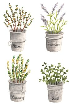 Easy Watercolor, Watercolor Cards, Watercolor Illustration, Watercolour Painting, Watercolor Flowers, Watercolours, Herb Art, Plant Painting, Art Prints For Home