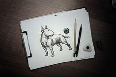 Bull Terrier on Behance