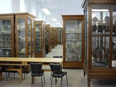 Anatómiai Múzeum   Anatómiai, Szövet- és Fejlődéstani Intézet