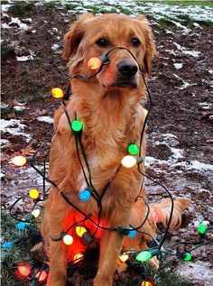 Got to do this with my dog this year ♥