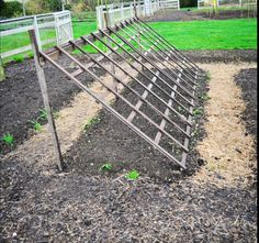 Cuke trellis idea