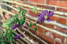 Create a rustic trellis with hazel poles, to support clematis, ivy and other climbers, with the help of expert advice from BBC Gardeners& World Magazine. Garden Poles, Garden Trellis, Garden Planters, Garden Yard Ideas, Garden Art, Garden Design, Green Garden, Tropical Garden, Hedgehog House