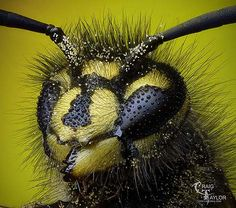 Macro insect photography - stunning!