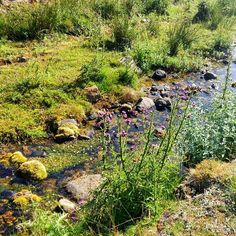 Riachuelo #green and #flowers