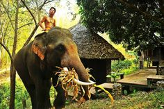 live with #elephants at #chailaiorchid #thailand - Get $25 credit with Airbnb if you sign up with this link http://www.airbnb.com/c/groberts22