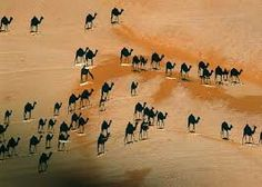 What you are seeing is the shadows from a camel train