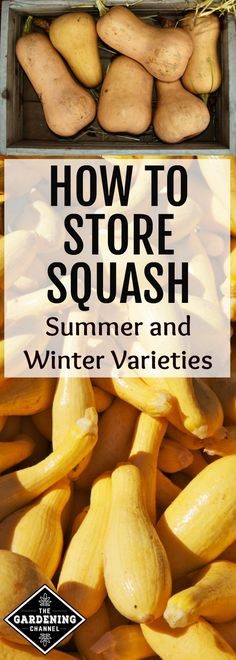 Grow your own squash in your vegetable garden and preserve it to last for up to nine months. Learn how to store winter and summer varieties for a lasting squash harvest.