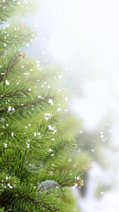 snow, tree, branch, needles wallpaper and desktop background 113862