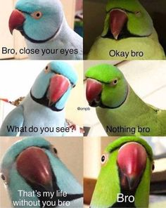 18 Animal Memes That Are Funny Feathered Fr.- 18 Animal Memes That Are Funny Feathered Fr… – 18 Animal Memes That Are Funny Feathered Friends 500 X 628 An – 9gag Funny, Crazy Funny Memes, Really Funny Memes, Funny Animal Memes, Stupid Memes, Cute Funny Animals, Funny Relatable Memes, Funny Animal Pictures, Funny Shit