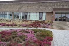 HAVEHJERNEN - Rømø Enjoy Resorts - Golf & Wellness - Romoe