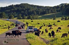 #CusterStatePark in the Black Hills of South Dakota