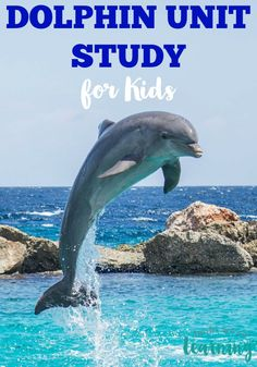 These dolphin facts for kids are great for teaching children about these intelligent marine animals!