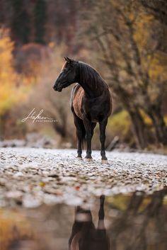 Pferde im Herbst am See | Wasserspiegelung | Pferdefotografie in der Schweiz | Pferdefotografie | Pferdefotos | horse photography | horse photography ideas | Pferdefotografie Ideen | Pferd | schwarzes Pferd | horse | black horse | Bilder | Fotoshooting | Foto | Fotografie