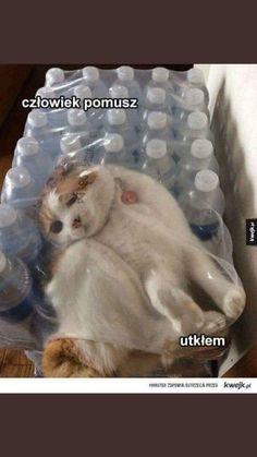 Animal Memes, Funny Animals, Cute Animals, Funny Cute Cats, Wtf Funny, Funny Images, Funny Pictures, Laughing Jokes, Sad Cat