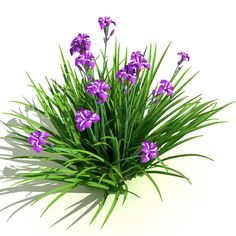 Iris ensata (Japanese Iris) Model available on Turbo Squid, the world's leading provider of digital models for visualization, films, television, and games. Palm Tree Art, Palm Trees, Landscape Diagram, Garden Clipart, Japanese Iris, Nature Plants, 3d Max, Grasses, Trees To Plant