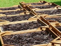 Coffee Break:How To Grow Your Own Vanilla Beans - Coffee Break Vanilla Plant, Vanilla Oil, Vanilla Orchid, Vanilla Chai, French Vanilla, Herb Garden, Vegetable Garden, Garden Plants, Greenhouse Plants