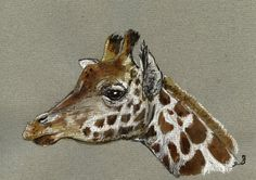 SOLD - Giraffe head africa animal 8x5 ORIGINAL ART WATERCOLOR painting by Juan Bosco