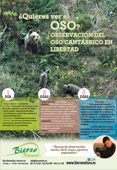 ¿Quieres ver el oso? http://www.bierzonatura.es