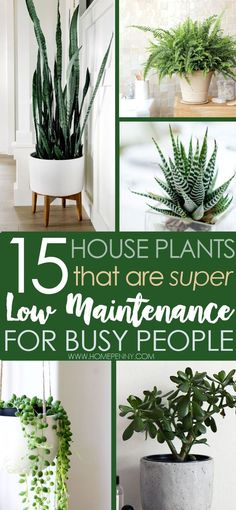 Would you love a bit of greenry in your home, but always kil plants? Check out our list of low maintenance house plants that are super easy to care for.