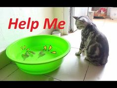 Video Funny Cat Play With Fish So Cute    Funny Cat vs Fish   Meo Cover Home