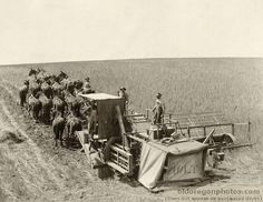 Horse Powered Combine | via shelly wexell