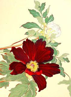 Peonies Konan Tanigami 1910