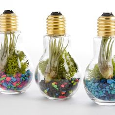 une ampoule electrique transformée en un terrarium mignonne, une idée parfaite comment décorer sa maison