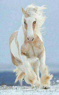 Big Horses, Cute Horses, Horse Love, Beautiful Horse Pictures, Beautiful Horses, Animals Beautiful, Animals And Pets, Cute Animals, Gypsy Horse