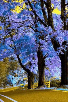I have one of these trees (Royal Empress Tree) in my back yard, can't wait till it blooms in a year or two! Saved from FaceBook page for Our World's View...stunning pics!!  www.facebook.com/...