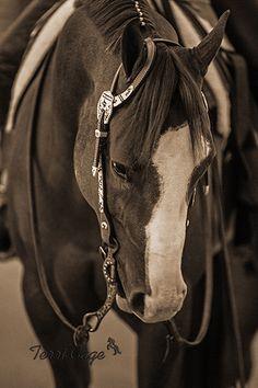 SEPIA_WESTERN_FORREST_HEAD_SHOT - Western Horse in Sepia
