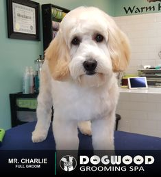 Mr. Charlie is in the house for a Full Groom @ Dogwood Grooming Spa - Knoxville!  Visit our website @ dogwoodgroomingspa.com or Call us at (865) 297-4277 to book an appointment for your pet!  #dogwood #dogwoodgroomingspa #creativegroomer #petstylist #petgroomerknoxville #petgroomer #petgrooming #pets #catgroomer #catgrooming #cats #doggrooming #deshedding #doggroomer #dogs #cityspotz #knoxville #knoxvilletn #knox