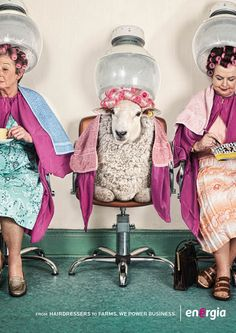 The Print Ad titled energia: Hairdressers to farms. was done by Boys and Girls Dublin advertising agency for product: Energia (brand: Energia) in Ireland. Creative Advertising, Advertising Poster, Advertising Agency, Mode Bizarre, Pelo Vintage, Funny Animals, Cute Animals, Poster Art, Gig Poster